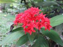 To jest piękni kwiaty Fotografia Stock