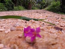 To jest piękny kwiat i ulica Obraz Stock