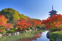 To-ji Pagoda in Kyoto, Japan during the fall season. Stock Photos