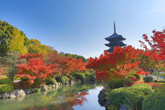 To-ji Pagoda in Kyoto, Japan during the fall season. Royalty Free Stock Image