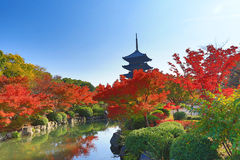 To-ji Pagoda in Kyoto, Japan during the fall season. Royalty Free Stock Photo
