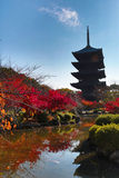 To-ji Pagoda in Kyoto, Japan during the fall season. Stock Images