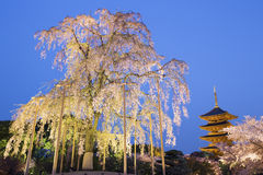 To-ji pagoda at night. Stock Photography