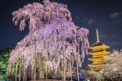To-ji Pagoda in the Spring Royalty Free Stock Photos