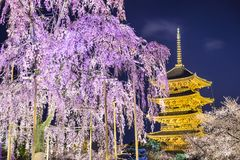 To-ji Pagoda in the Spring Royalty Free Stock Images