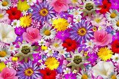 tło kwiat Obrazy Royalty Free