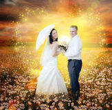 To the magic land. Newlyweds going on daisy field in magic light Stock Images