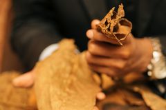 To make a cigar with his hands, sheets for a cigar, handwork.  Royalty Free Stock Photo