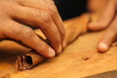 To make a cigar with his hands, sheets for a cigar, handwork.  royalty free stock images