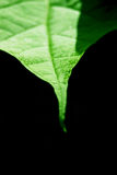 To the Point. Macro image of a green leaf stock photo
