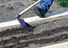 To prepare garden bed. Prepared garden bed before sowing seeds Stock Photography