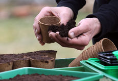To prepare peat pots for seed sowing. Prepare pots with good garden soil for seed sowing Stock Image