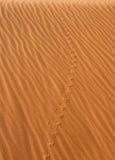 to pustynne zwierzę ślady Fotografia Royalty Free