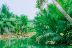 Palm trees near the river royalty free stock photos