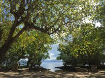 To the sea. Tropical island. a view of trees and boat's parking lot Royalty Free Stock Image