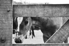 To spy. A horse that is in a shelter looks at me through the gate Stock Image