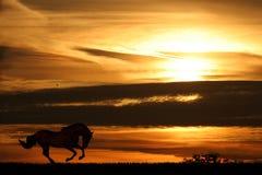To the sundown. Photo of running horse on sundown's background stock photography