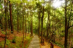 Gem Mountain Forest Road, Hangzhou. To the time to life, rather than to life in time to the time to life, rather than to life in time stock photos