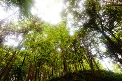 Gem Mountain Forest, Hangzhou royalty free stock images