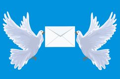 To you the letter. White carrier pigeons with an envelope Stock Photos