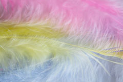 Tło zakończenie w górę wizerunku pastelowych menchii, koloru żółtego i błękita piórka, Fotografia Stock