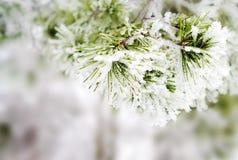 tło zima Zdjęcie Stock