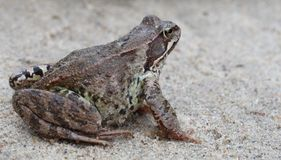 Free Toad Stock Image - 3159271