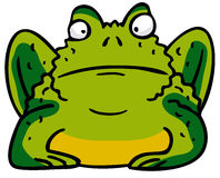 Toad. Green Toad Stock Photo