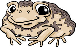 Toad amphibian cartoon illustration. Cartoon Illustration of Funny Toad Amphibian Animal Royalty Free Stock Photos
