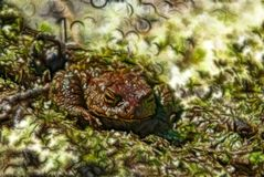 Toad as attribute of witchcraft and witches assistant. Abstract fractal light background. Generalization images of nature. Old hag. Toad is poisonous and man was Stock Photography