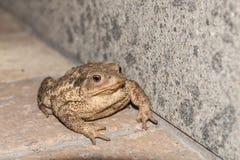 Toad Stock Photos