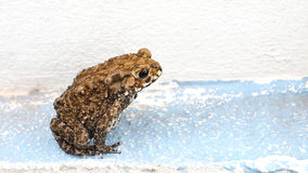 Toad and clipping paths Stock Image