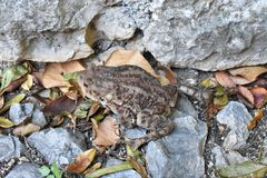 The toad on the ground in the shadow. Blagaj,Bosnia and Herzegovina royalty free stock image