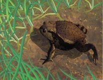 Toad in habitat Royalty Free Stock Photo