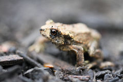 The toad. Near the pond Royalty Free Stock Images