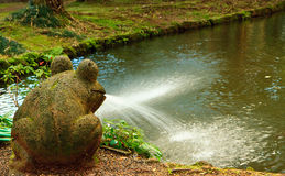 Toad By The Pond, Oahu Hawaii Stock Image