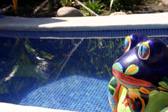 Toad at the pool. Decorative toad in the pool Royalty Free Stock Photos