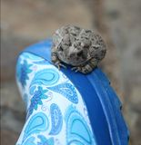 Toad on a rain boot Stock Photo