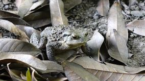 A toad Stock Photography