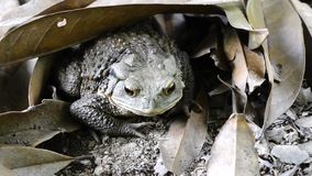 A toad Stock Image