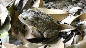 A toad Stock Images