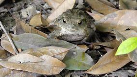 A toad Royalty Free Stock Images