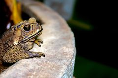 Toad standing on cement floor at night stock image