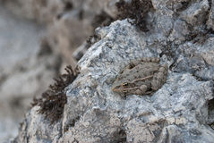 Toad on a stone. Stock Images