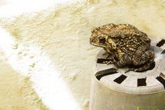 Toad. Stock Photos