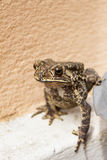 Toad. Stock Images