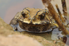 Toad Stock Images