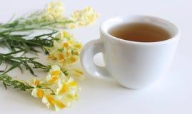 Toadflax commun jaune fleurissant, Linaria vulgaris et tasse de fin de thé d'isolement sur le fond blanc Plantes médicinales, her image stock
