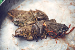 Toads for consumption are being sold on a Vietnamese market Stock Photography