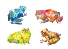 Toads set. Set of different watercolor toads: blue, red, yellow Stock Images